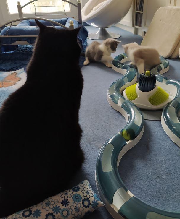 Drei verspielte Kätzchen kehren einen schwarzen Monsterschwanz beim Gangbang um